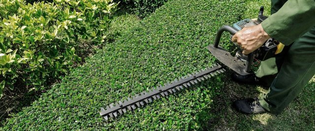 hedge services Ascot