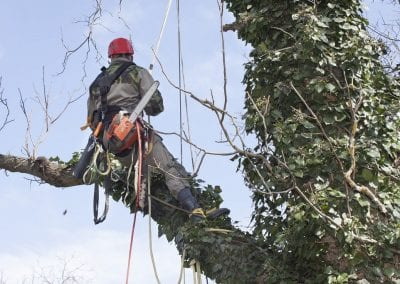 Tree-surgeon-at-work