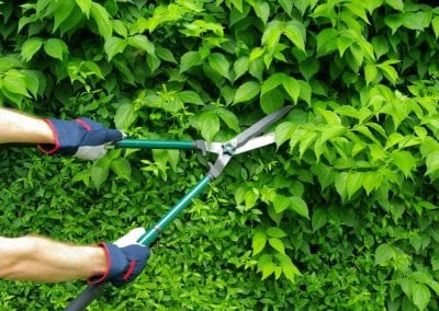 row1-Hedge-Trimming-Maintenance