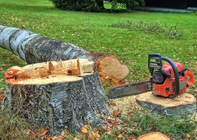 tree-felling-and-dismantling