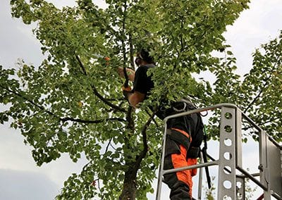 tree-pruning-and-reshaping