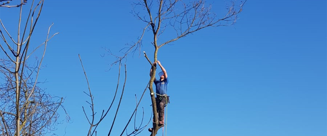 sectional tree dismantling reading