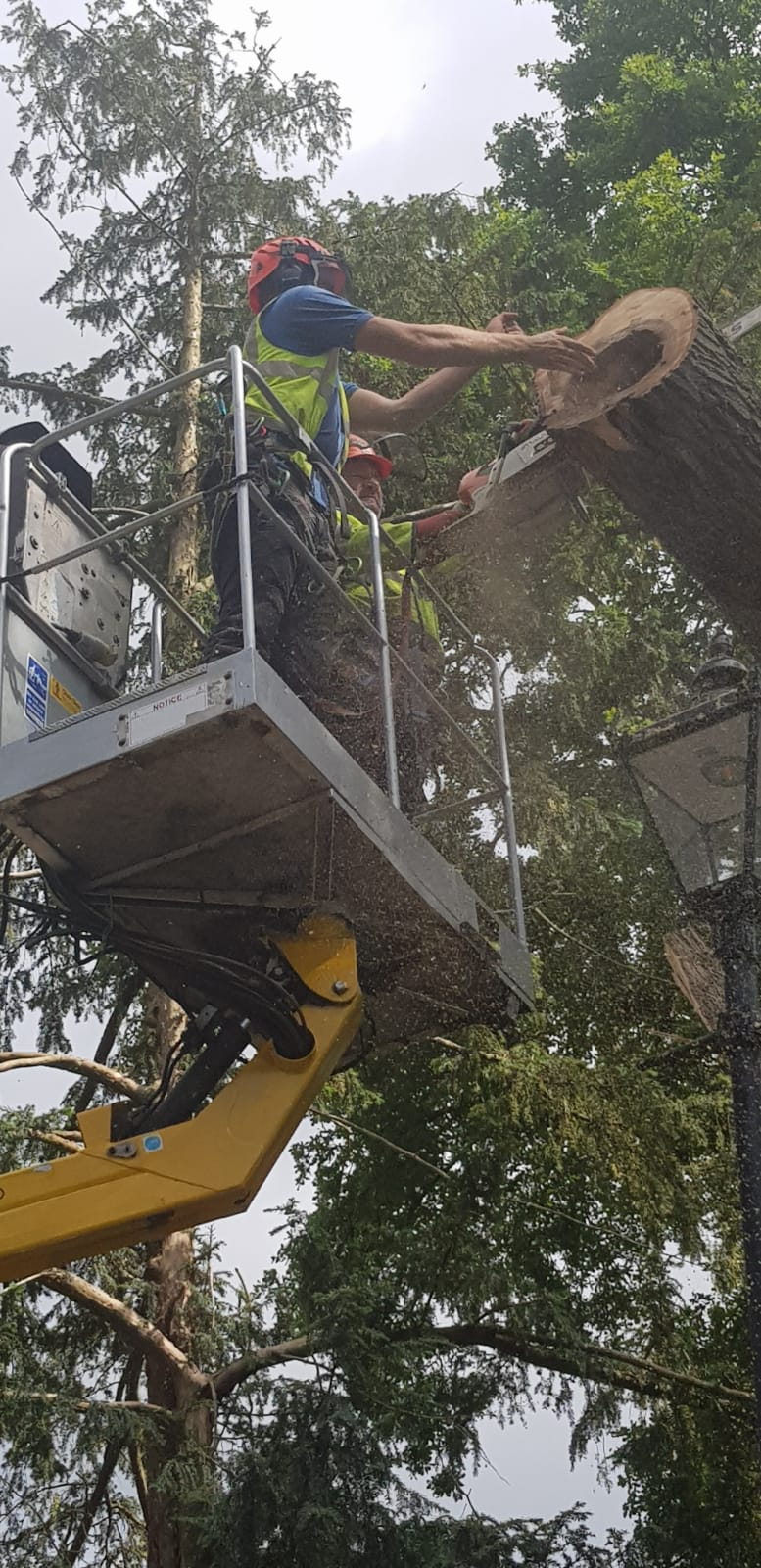 tree dismantling reading