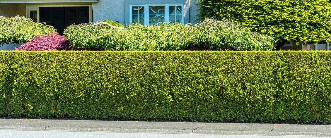 hedge trimming fleet