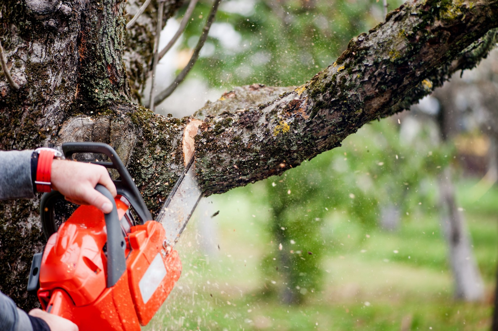 branch & tree removals reading