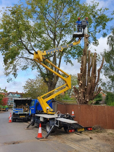 domestic tree dismantling henley
