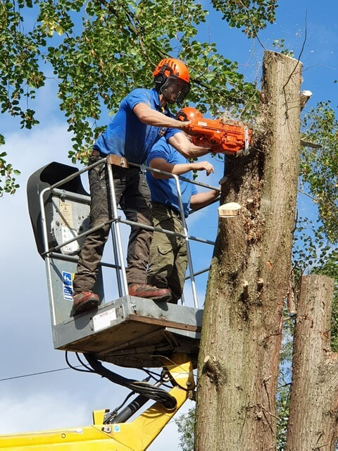 tree surgeon vacancies